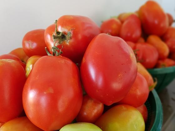201802 tomato shot A