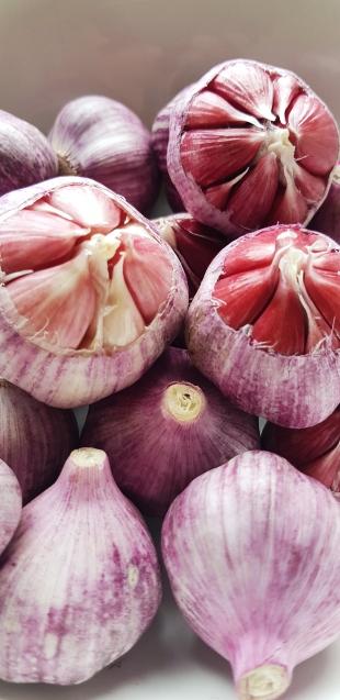 Rosettes of garlic up close