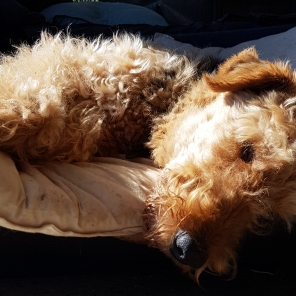 Ginger catching happy rays
